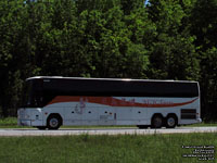 New Golden Horse NGH Tours 6230