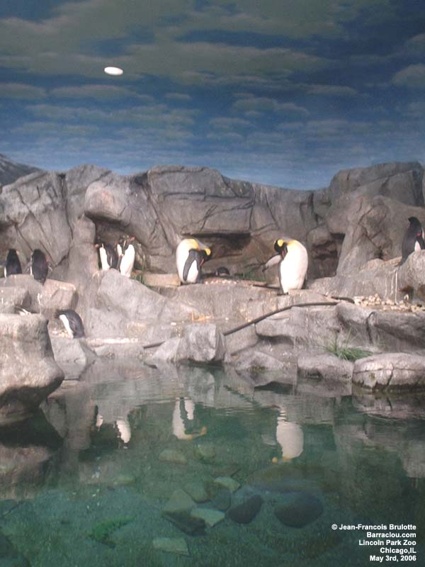 Lincoln Park Zoo Chicago Illinois Attractions